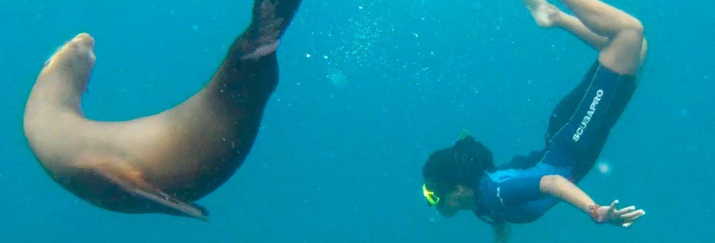 Sea lion | Galapagos diving