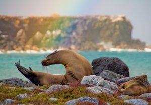 Galapagos Seals | Ecuador