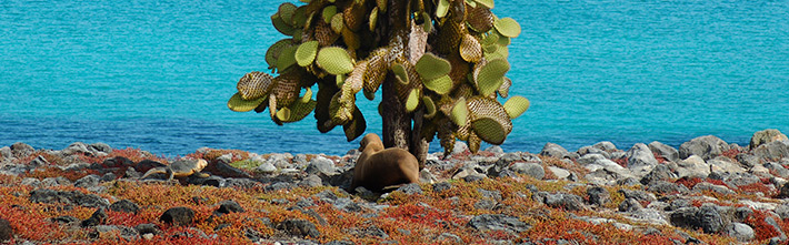 Lowlands zone Galapagos