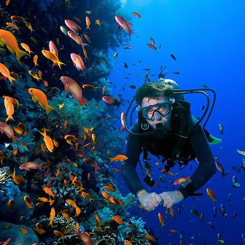 marine wildlife galapagos