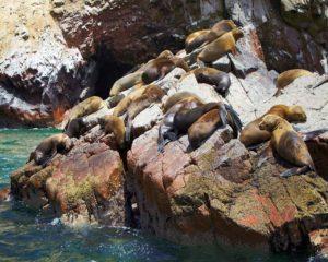 Paracas | Peru