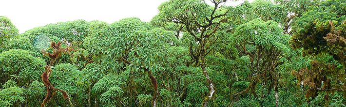 Scalesia zone Galapagos