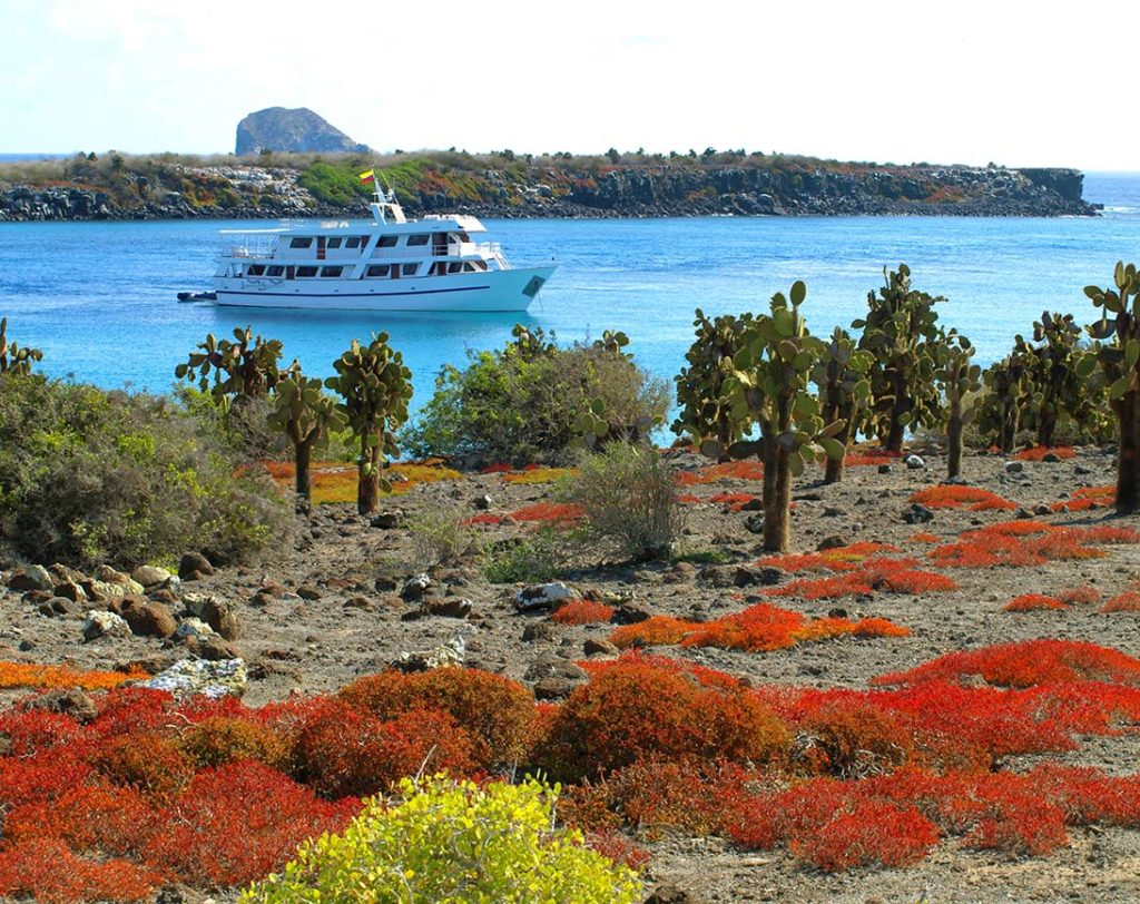 Plazas islands | Galapagos islands