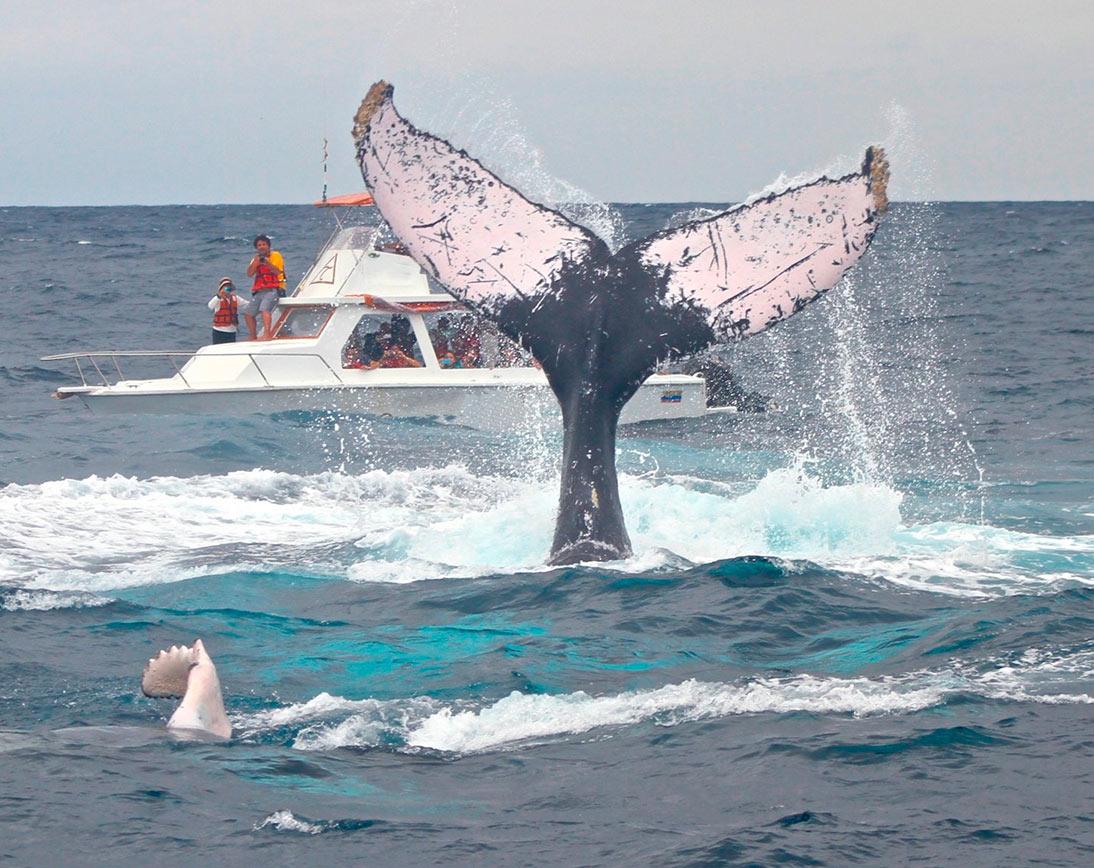 Whale Puerto Lopez