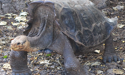 Wildlife Galapagos