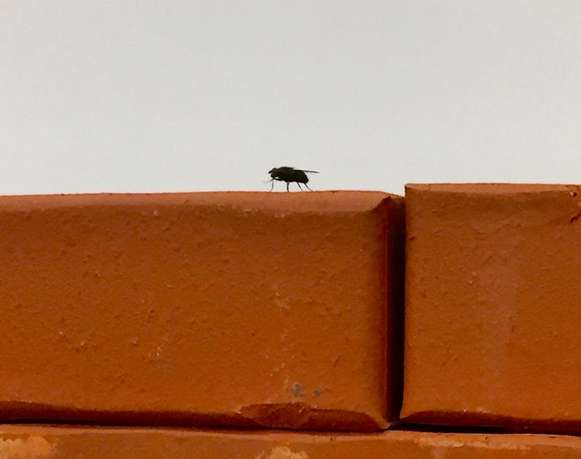 Una mosca es una mosca es una mosca | Who writes?