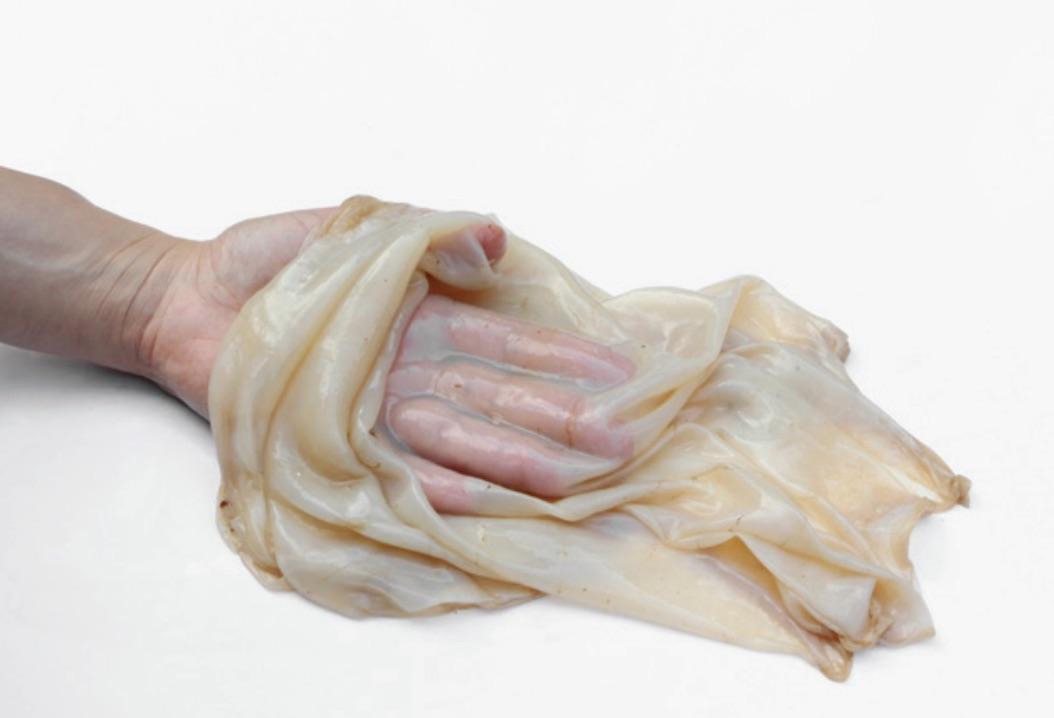 Amor Muñoz, celulosa bacteriana durante el proceso de producción de Hybrida, 2020, instalación escultórica sonora. Cortesía de la artista