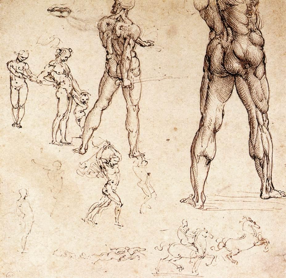 Studies on human anatomy Preview 0