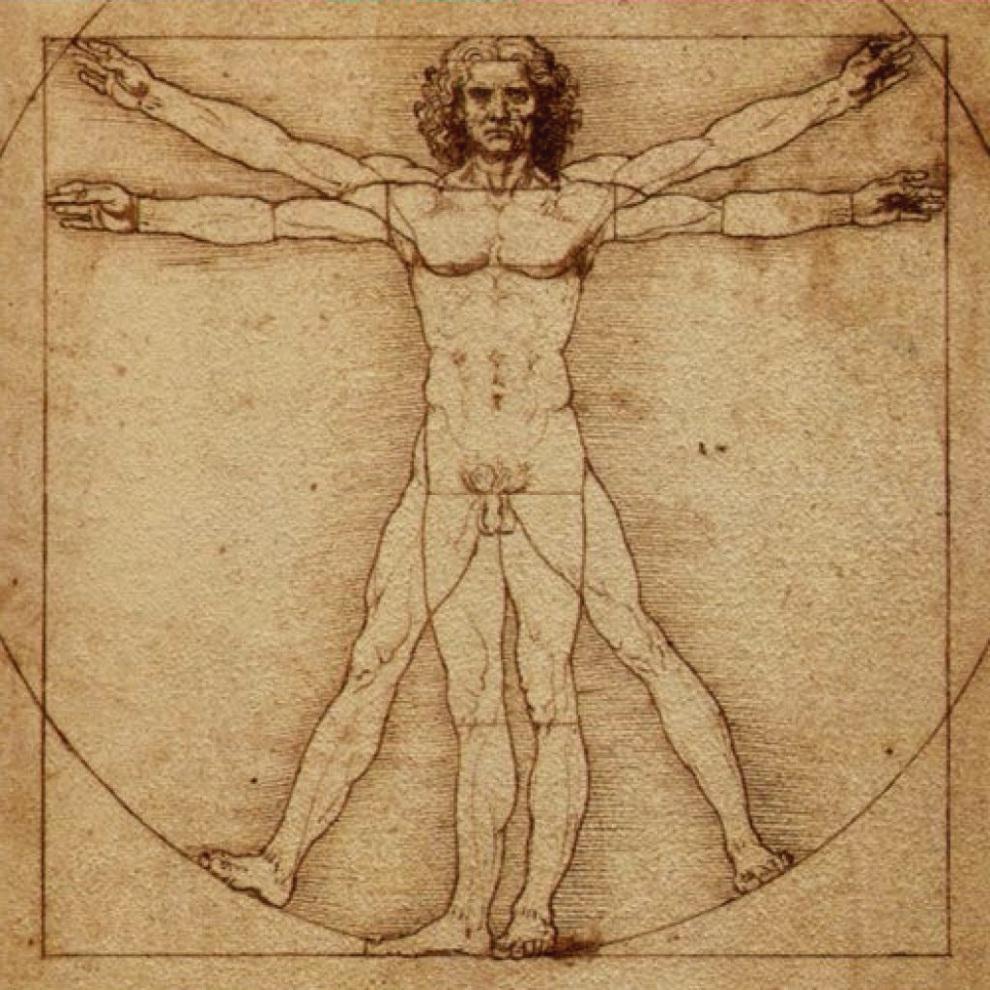 Studies on human anatomy Preview 5