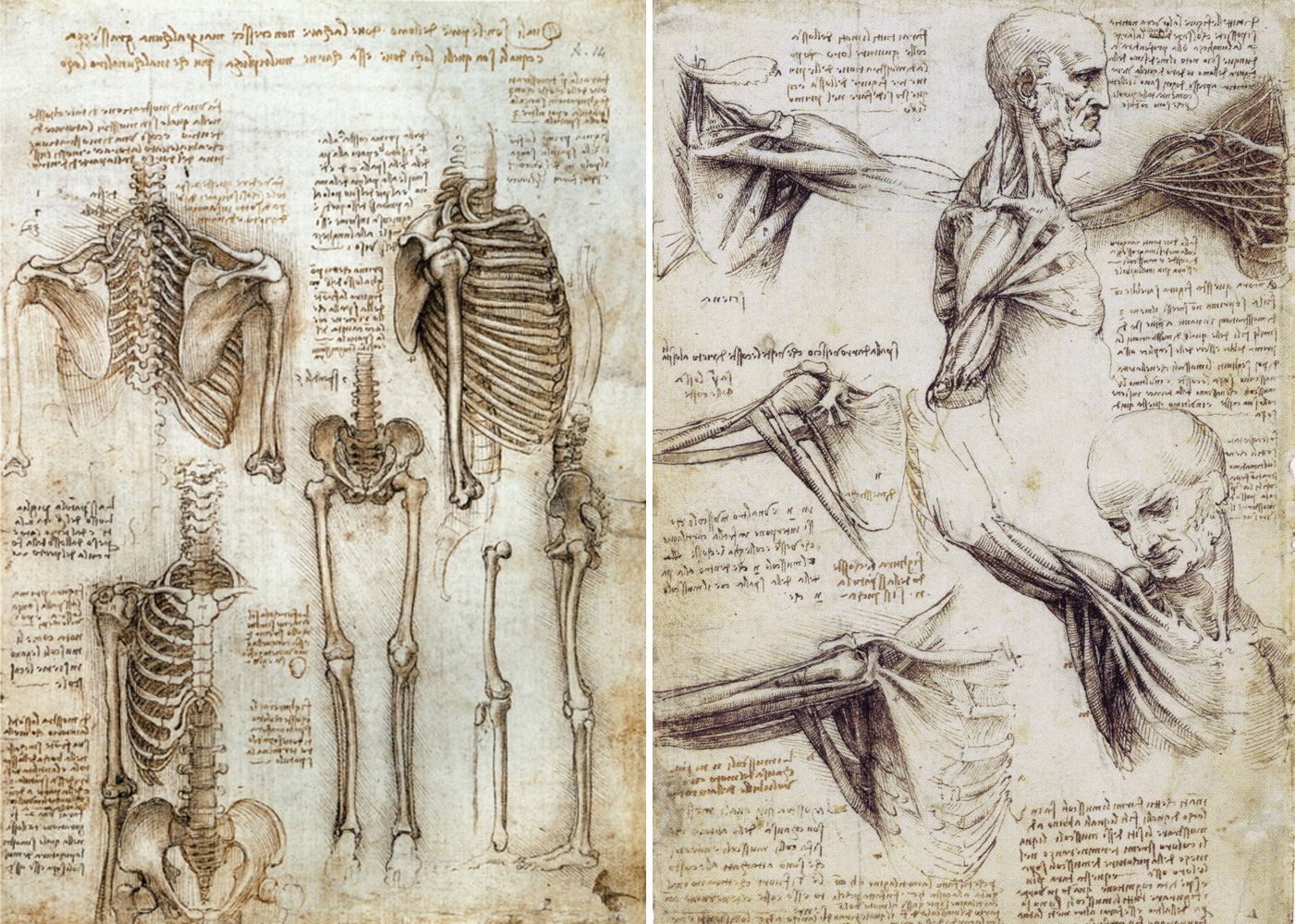 Studies on human anatomy Preview 2