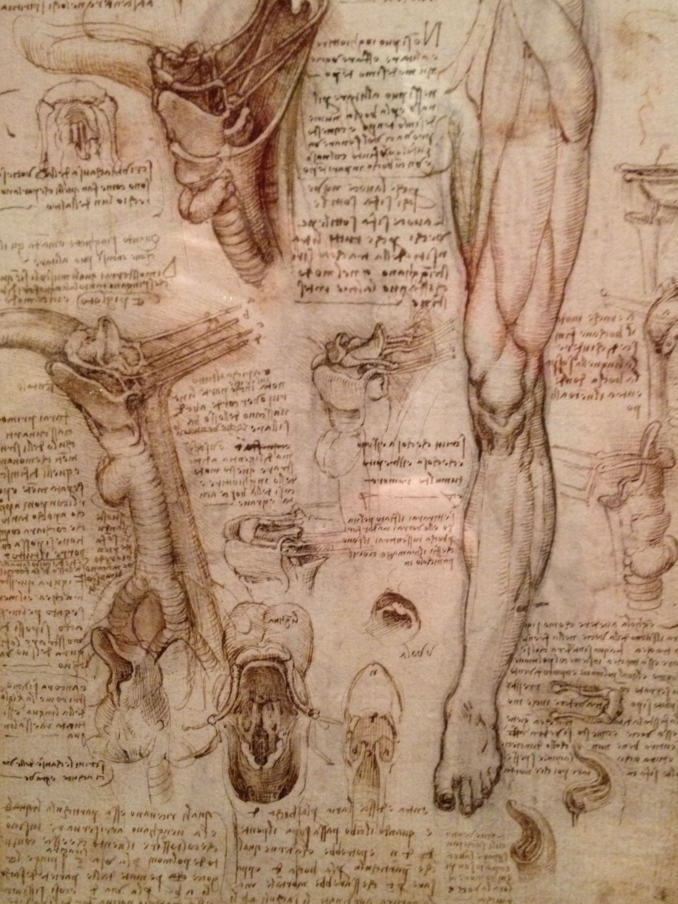 Studies on human anatomy Preview 4