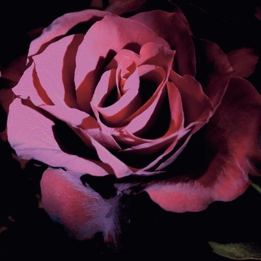 💜🖤.rosie.b.pagan.🖤💜