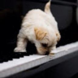 PianoPup2206