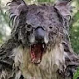 Wet Koala 🐨