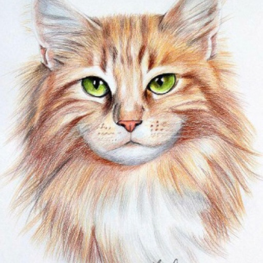 KittyColorandContest