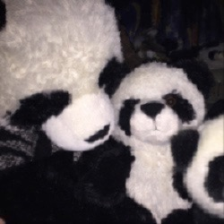 PandaLuv🐼or [🐼❤️]