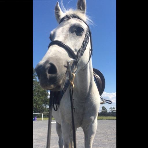 Horse girl😍🐴