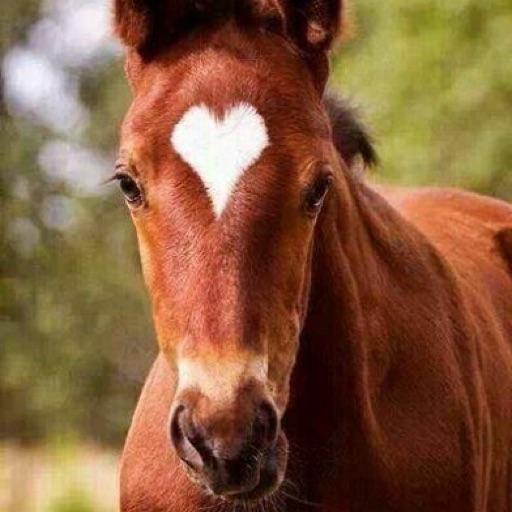 Pro horse rider