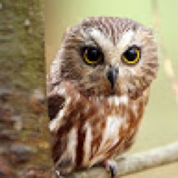 owl_lover225