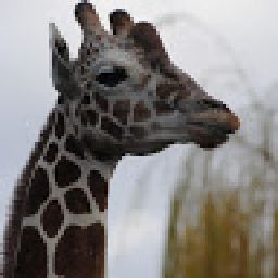 Neon Giraffe