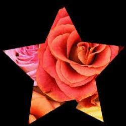 Star Rose