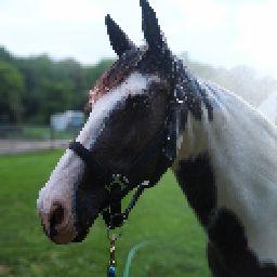 Horse l❤️ver