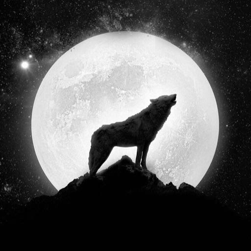 Ice wolf 🐺