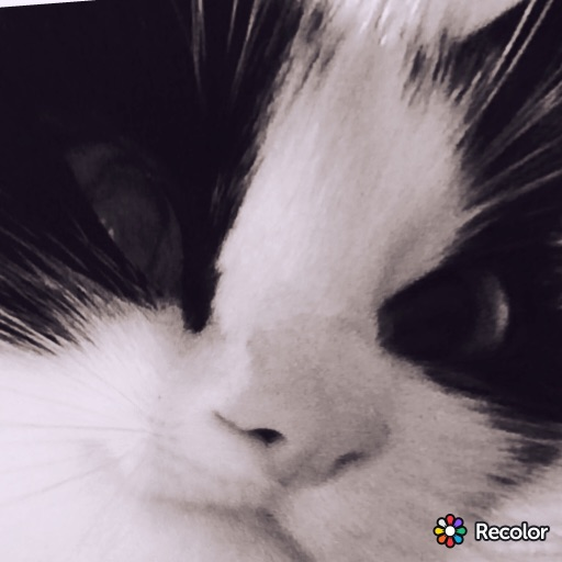 AnnMooney