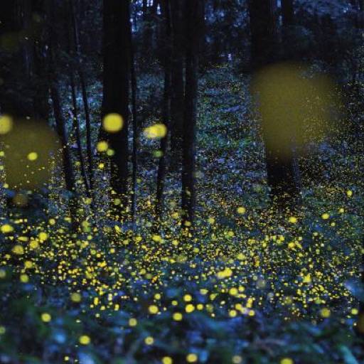 Firefly!💖💖💖