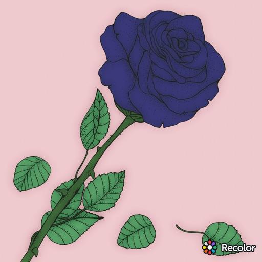 Blue Rose💙