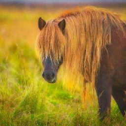 horses lady