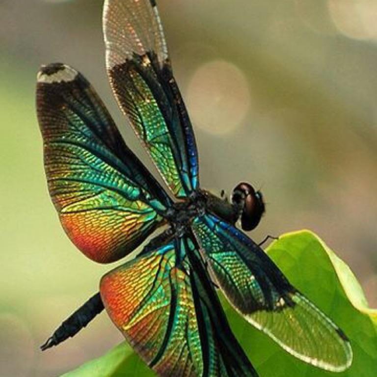 Nan-Dragonfly Gramma