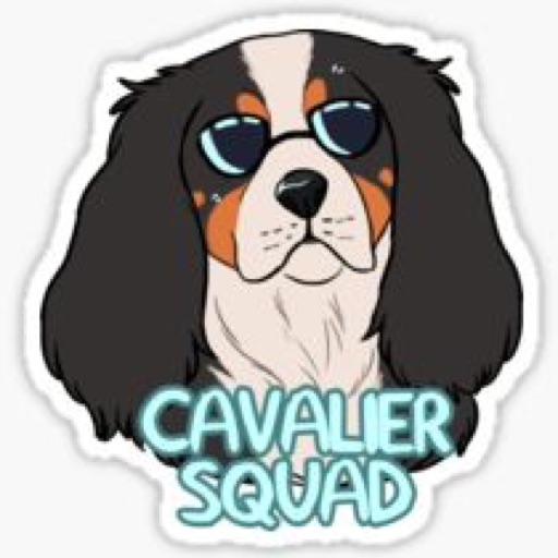 Bailey the cavalier