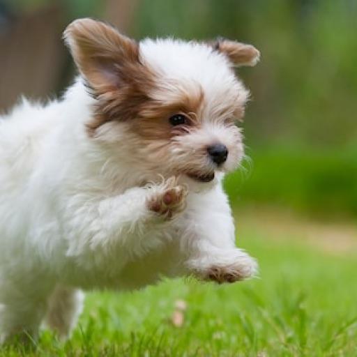 PuppyLover