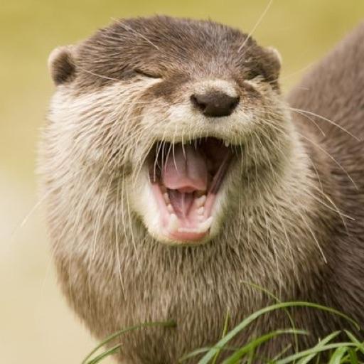 Avery The Otter Girl