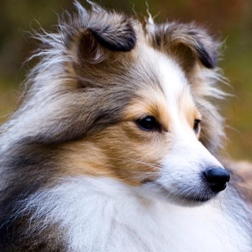 totally dog lover🐶