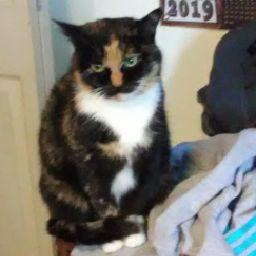 Kittycat777