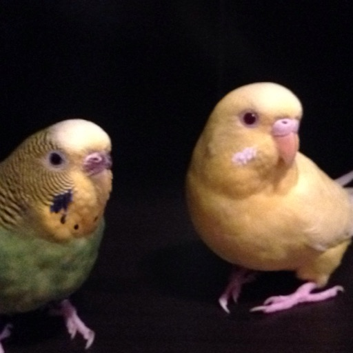 perfect parakeets