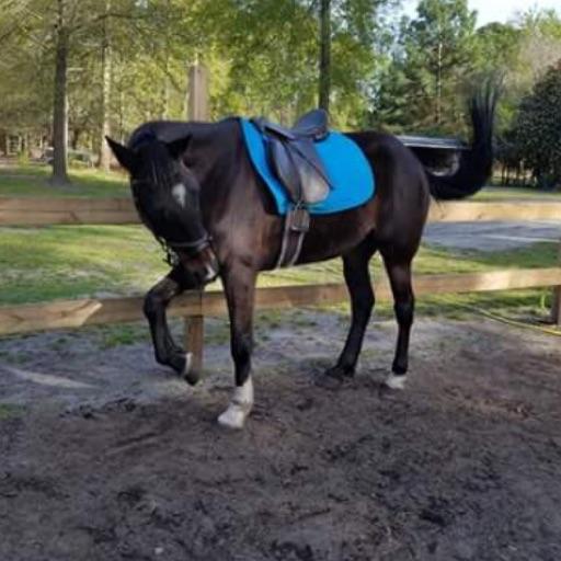 Happi_Horses