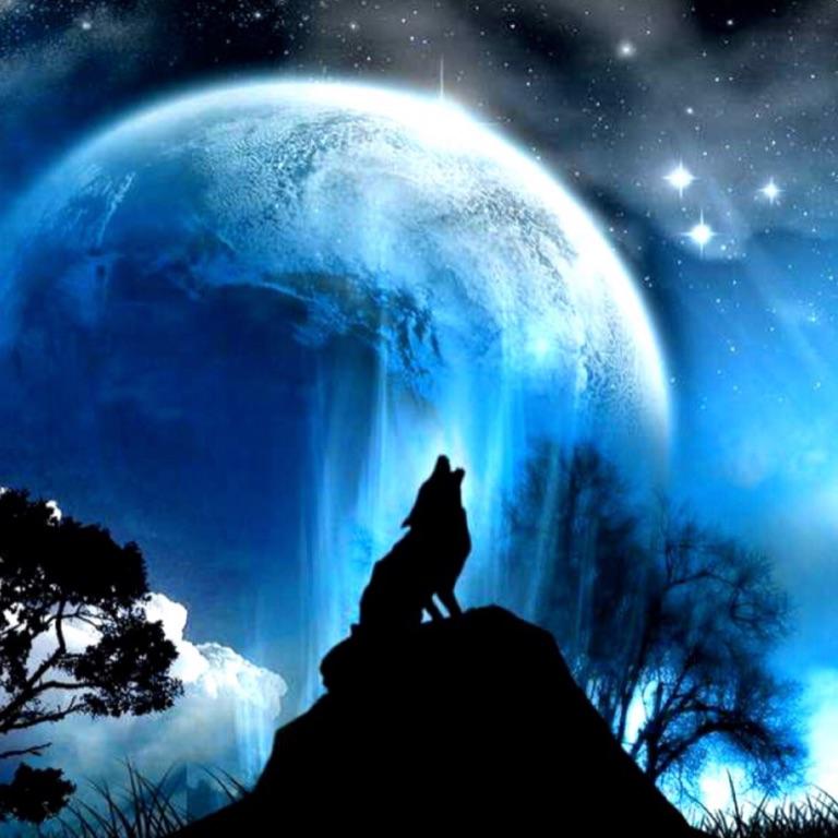 ❄️ snow wolf moonlight ❄️