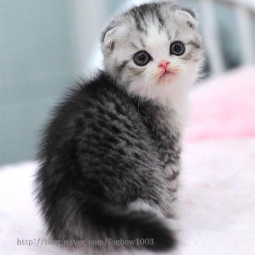 Cats r meowsome
