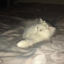 kittylover101