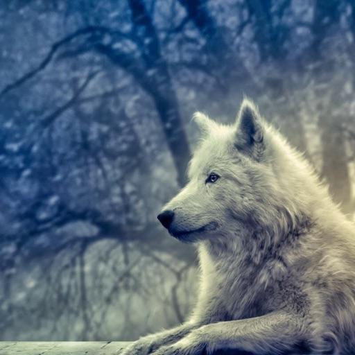 alpha wolf dreamer 💖