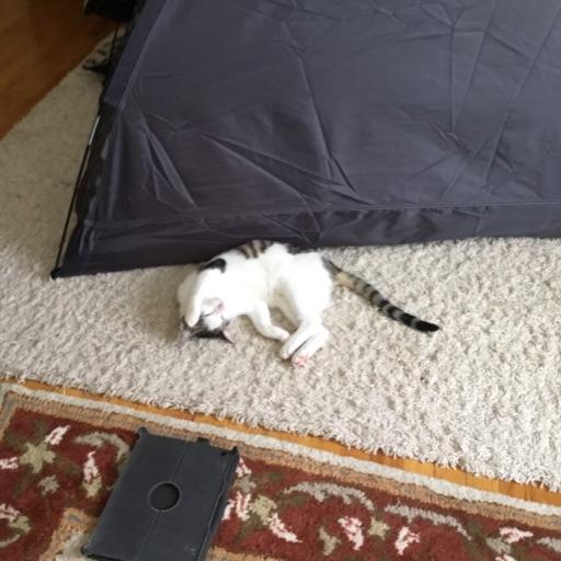 MARI CAT SQUAD 🐱🐈😻