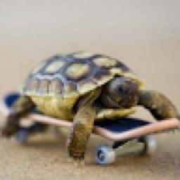 Swag Turtle
