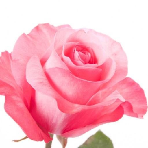 abby.rose.39