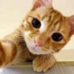 Crafty Cat 🎨