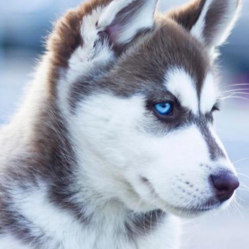 🐕 puppymaster