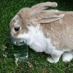 Bunny lover 2008