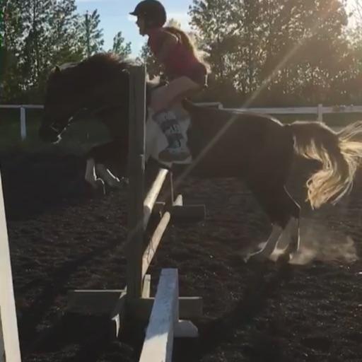 Love horses forever😍😍